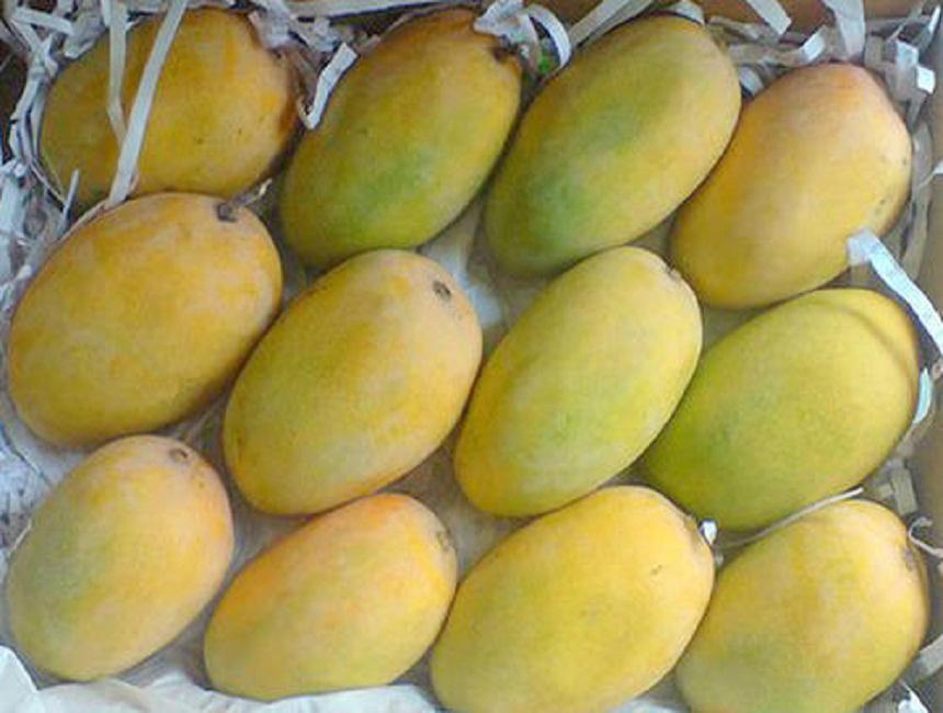Fresh Fruits & Vegetables Suppliers & Exporters in India