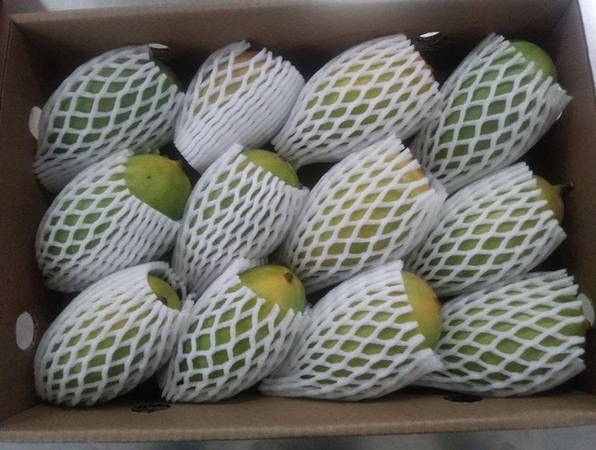 Fresh Kesar Mangoes - Fresh Indian Mangoes For 2018