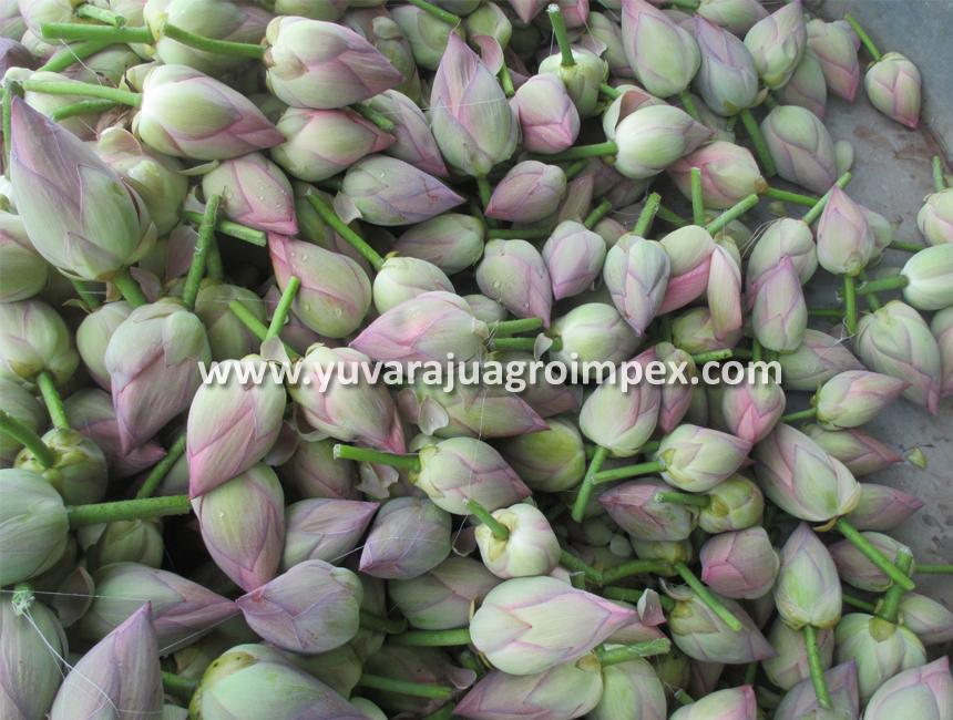Lotus Flower Manufacturers Suppliers Exporters In India